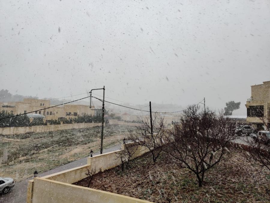 جفرا تنشر صوراً للزائر الأبيض في مختلف مناطق المملكة